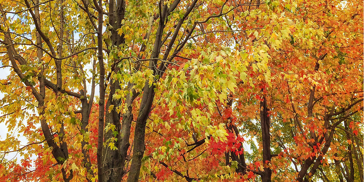 Jahreszeit Herbst